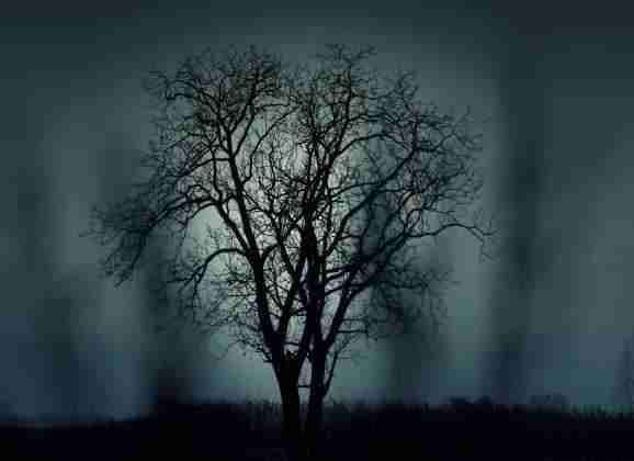 Densa oscuridad