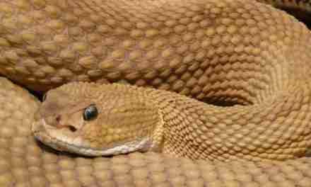 La vara y la serpiente